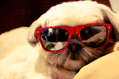 Hipster Puppies on Help  Hipster Puppies Have Stolen My Heart    Lovelyish